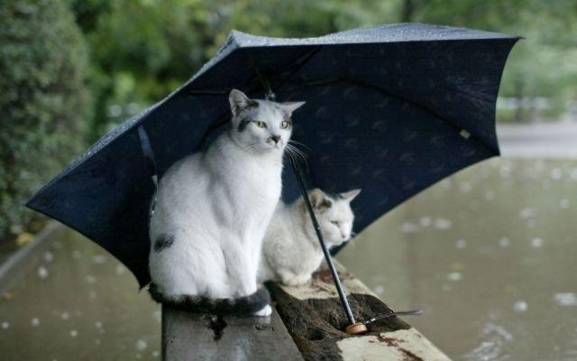 Погода в Волковыске